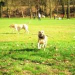 Пол-года, как Сэр в Масле, или Ушат пса в весенней Стромовке